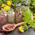phytothérapie plante